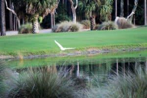 Bird Flying over Golf Course