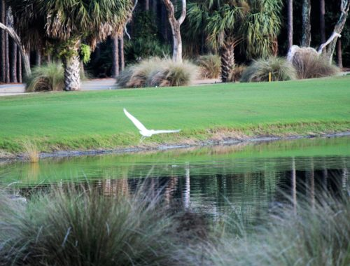 Bird Flying over Golf Course