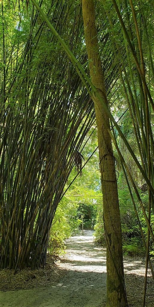 Bamboo Trail McKee Botanical Gardens
