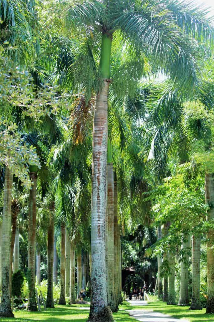 Royal Palm Grove